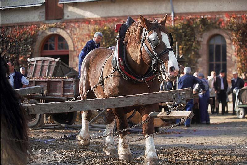 Passion du cheval, Visitez le Haras de Hennebont