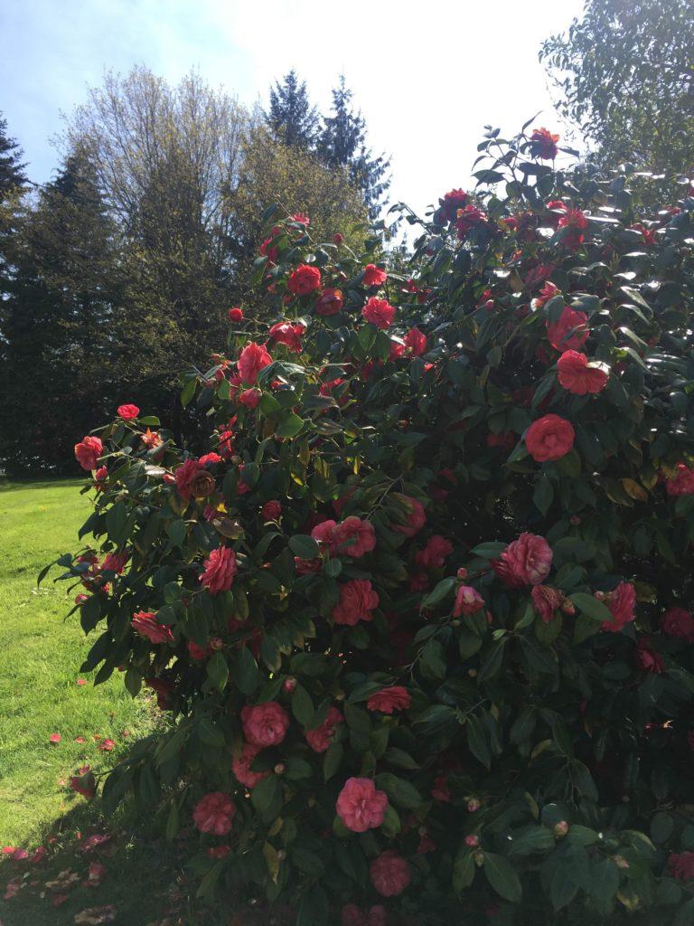 Jardin_Fleurs